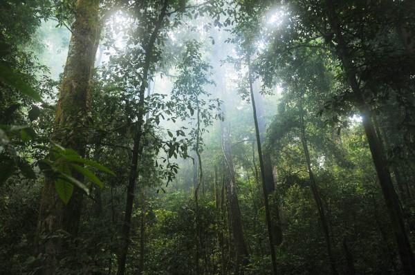 Tierschutzaktion-August-2019_Palt-fpr-the-Planet_Beitragsbild_jungle-601542_1920