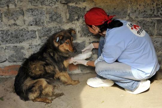 Tierschutzaktion-Mai-2017_Streunerhilfe_Beitragsbild_SetRatioSize540532-Ukraine_2012_Zaporizhzhya_m