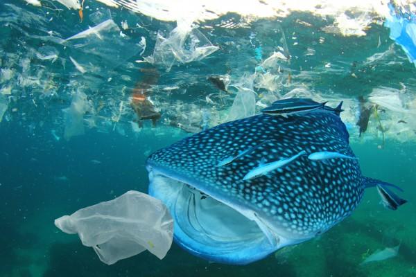 nutri-plus-ocean-plastic-umweltschutz