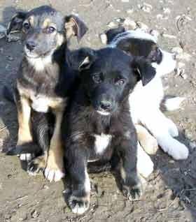 Tierschutzaktion-Januar-2017_Streunerhilfe-Rumanien_Beitragsbild_threedogs