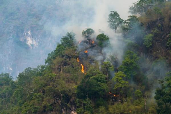 Waldbrande-im-Amazonas_Beitragsbild_AdobeStock_261767346
