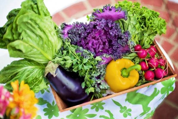 vegane-Ernahrung_Stoffwechsel_Beitragsbild_vegetables-790022_1920