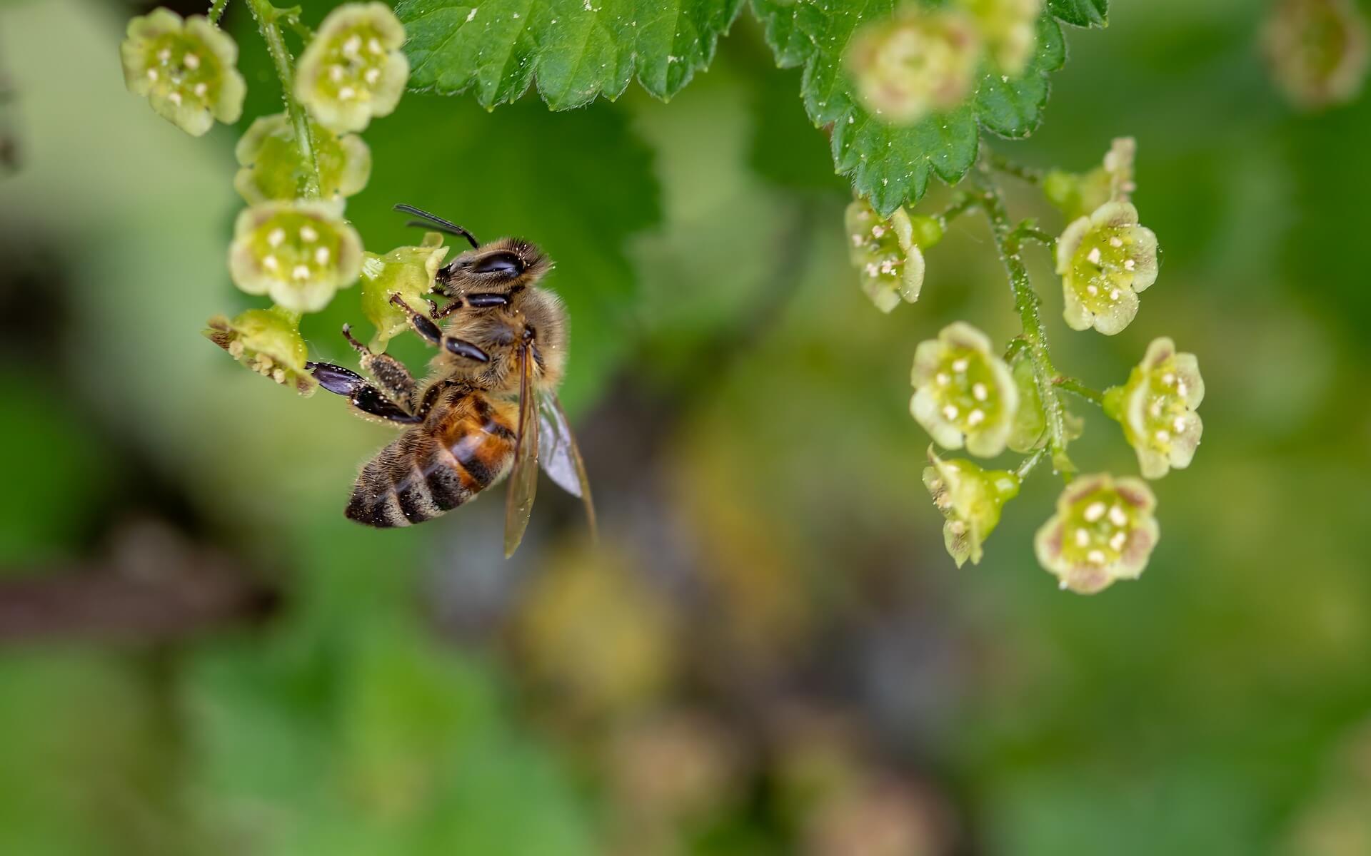 Tierschutzaktion-Juni-2018_Bienenretter_Biene_bee-3360682_1920