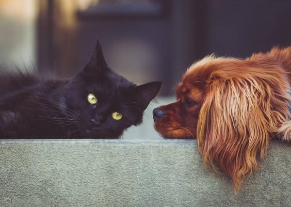 Tierschutz-April-2019_Verein-Tasso-e-V-_Beitragsbild_dog-2606759_1920