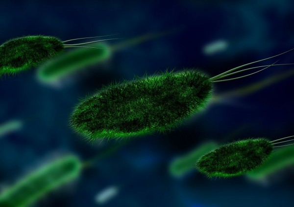 Vitamin-B12-bei-veganer-Ernahrung_Beitragsbild_bacteria-106583_1280