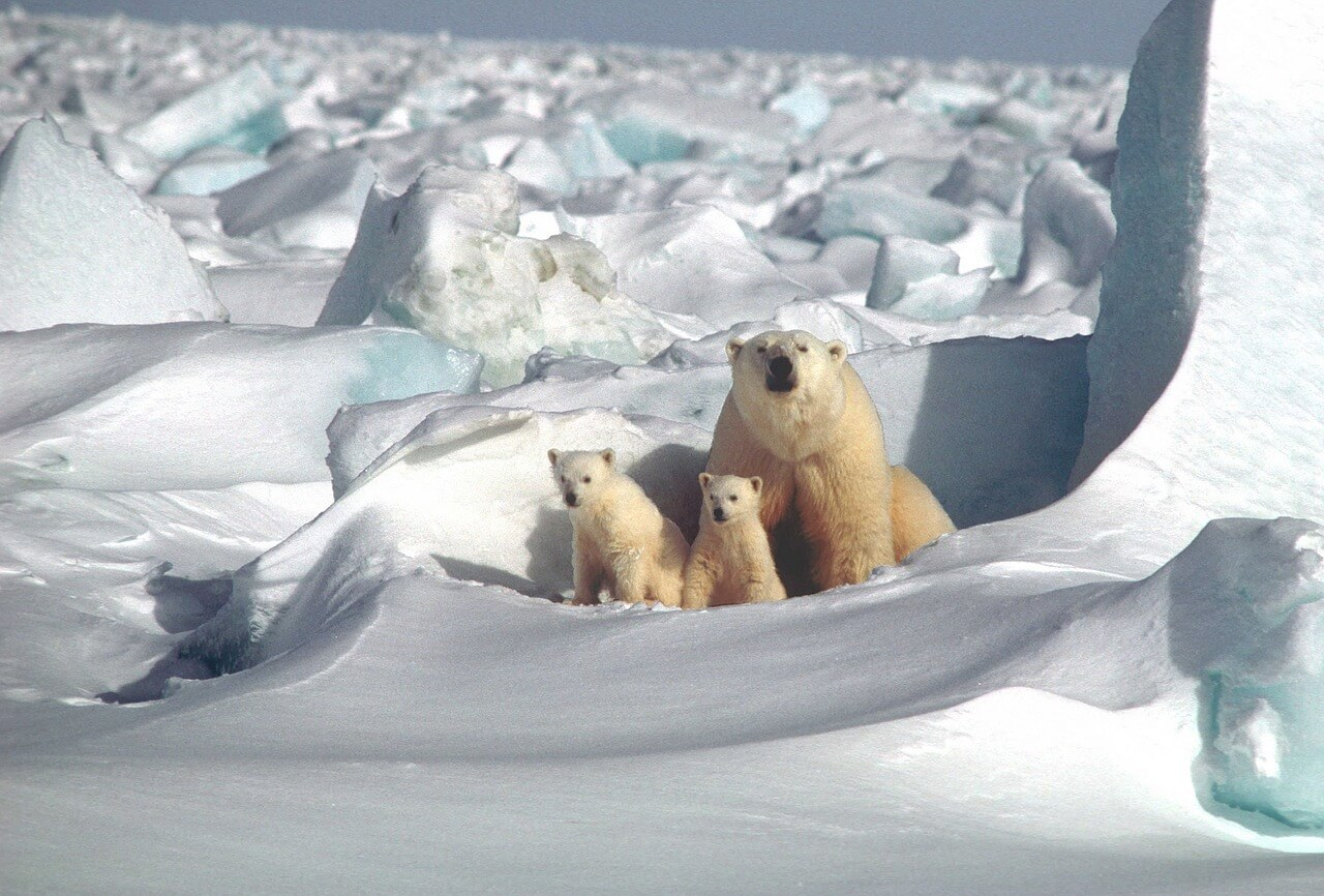 Tierschutzaktion-Januar-2018_WWF_polar-bear-1509103_1280