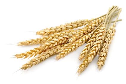 Weizen – Basiswissen Mikronährstoffe