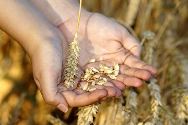 Nahrstoffgehalt-in-Lebensmitteln_Beitragsbild_wheat-3534233_1920